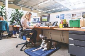 Business woman at desk with service animal
