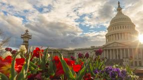 Low Angle View Of Plants Against Cloudy Sky with Capitol Building
