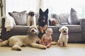 A baby and dogs in a living room