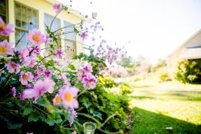 Flowers in the front yard of a house