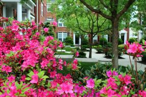 Courtyard between townhouses with pink azaleas in foreground