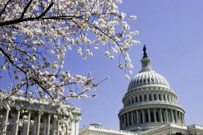 U.S. Capitol building in Washington, DC with cherry blossoms in foreground