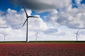 Wind farm in a field of red flowers
