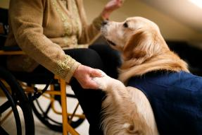 Woman in wheelchair holding the paw of a service dog