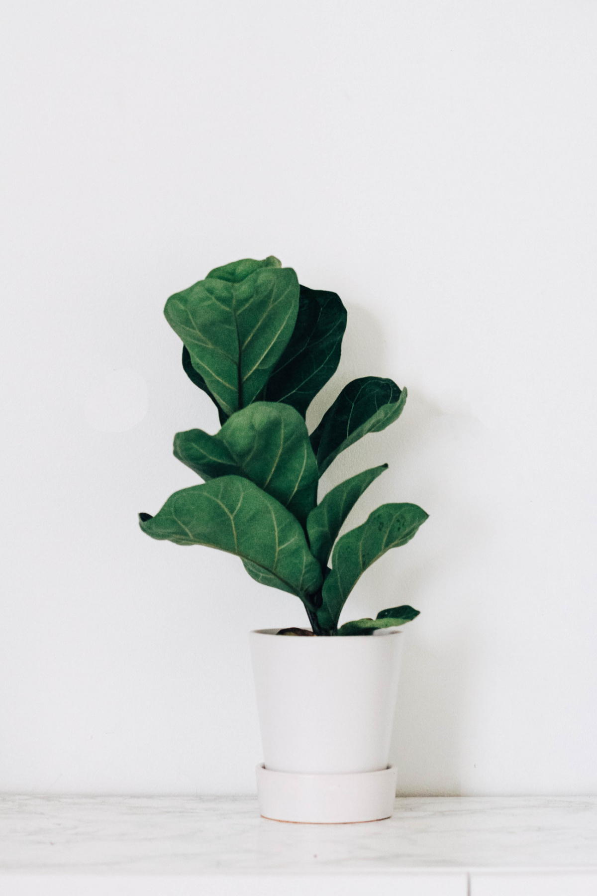 A fern in front of a white wall