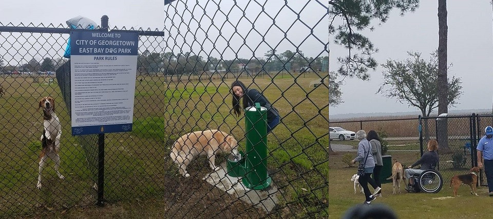 Three images put together showing a dog near the fence, a dog drinking water by the water fountain, people walking their dogs