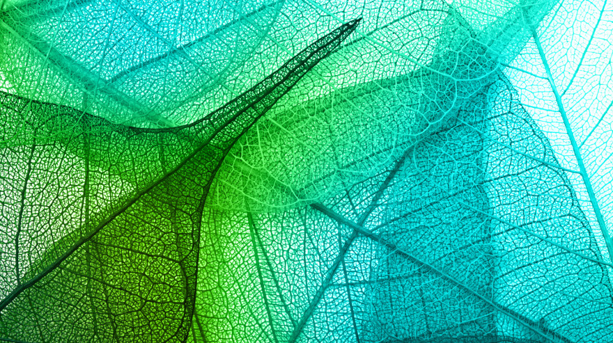 Green abstract leaf