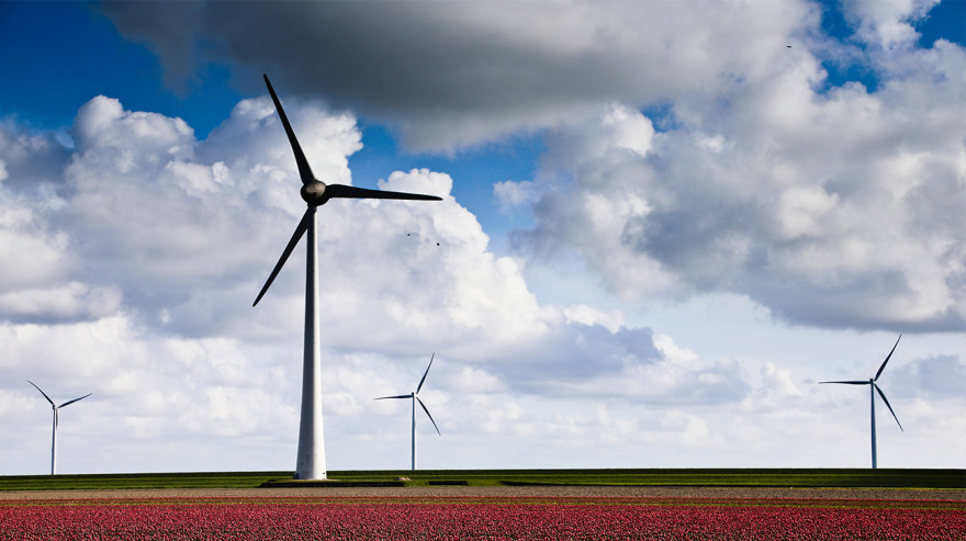 Wind farm in a field of red flowers