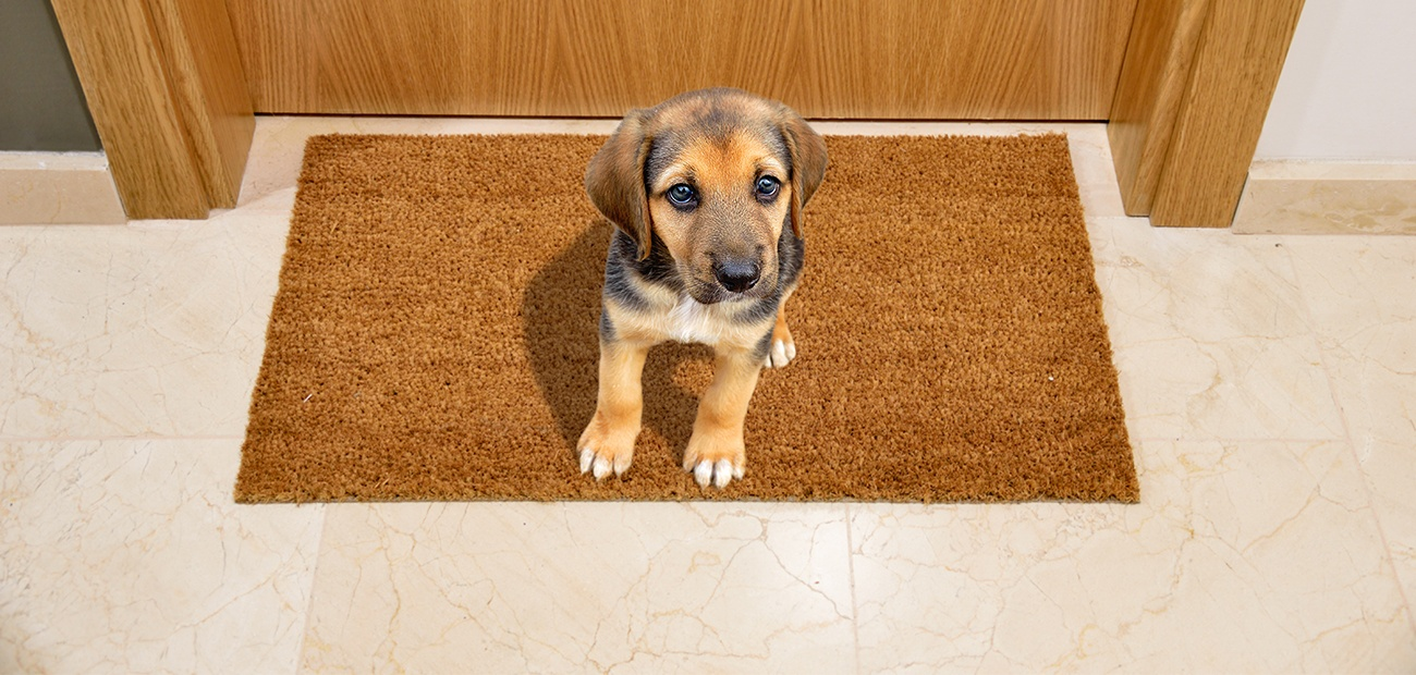 Puppy sitting on a mat in front of a door