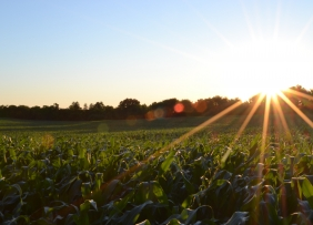 Agricultural/Farm Land
